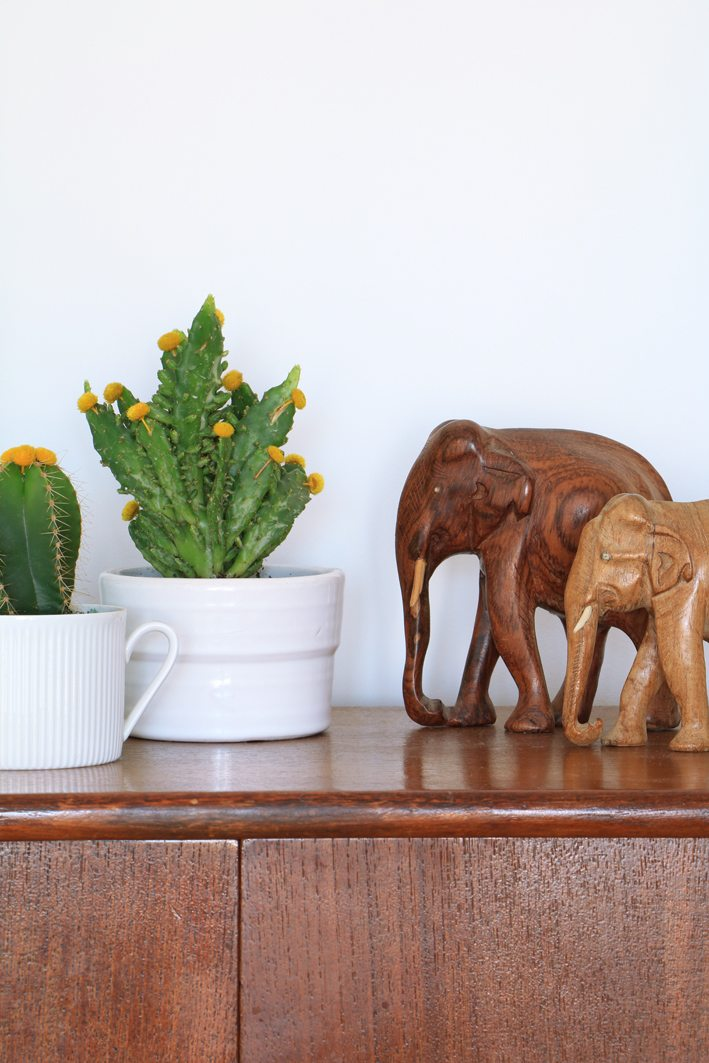 vintage & plants