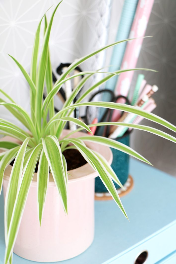 a workspace with plants spiderplant