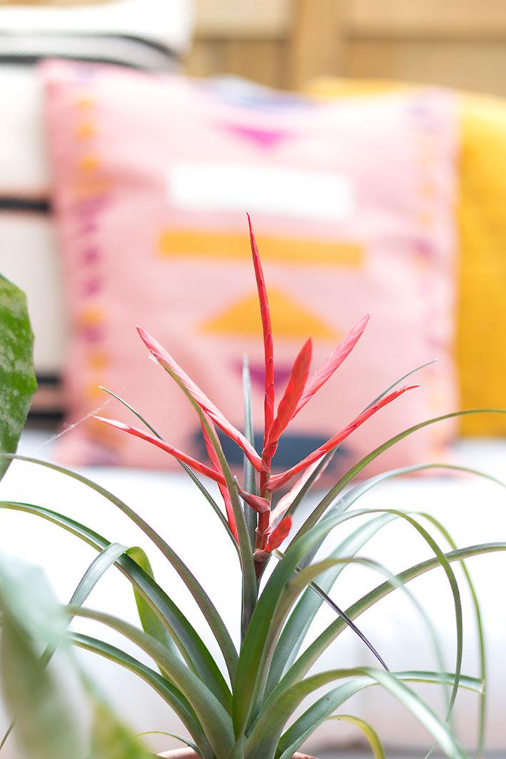 tropische tuinplant