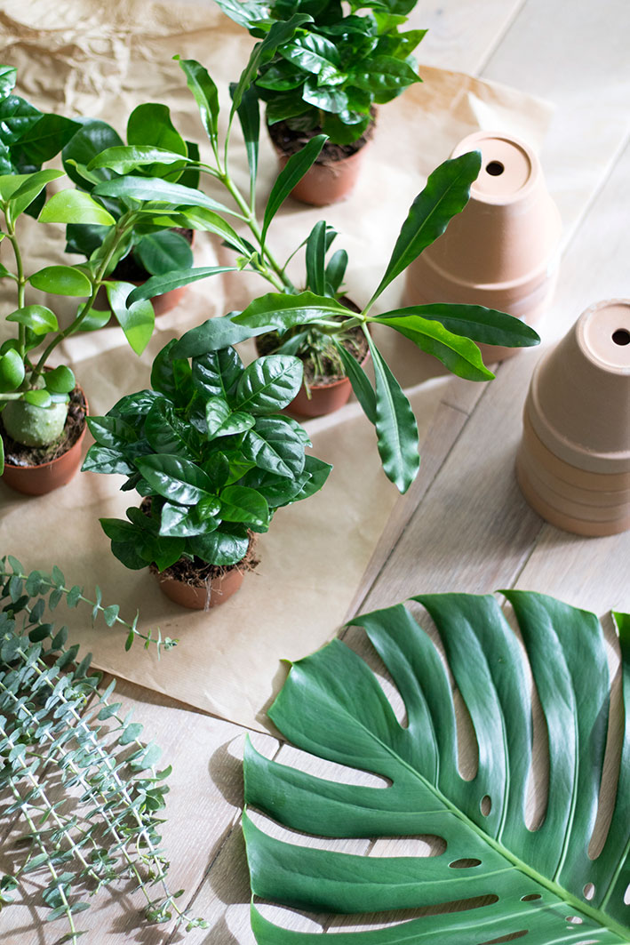 diy workshop plantjes