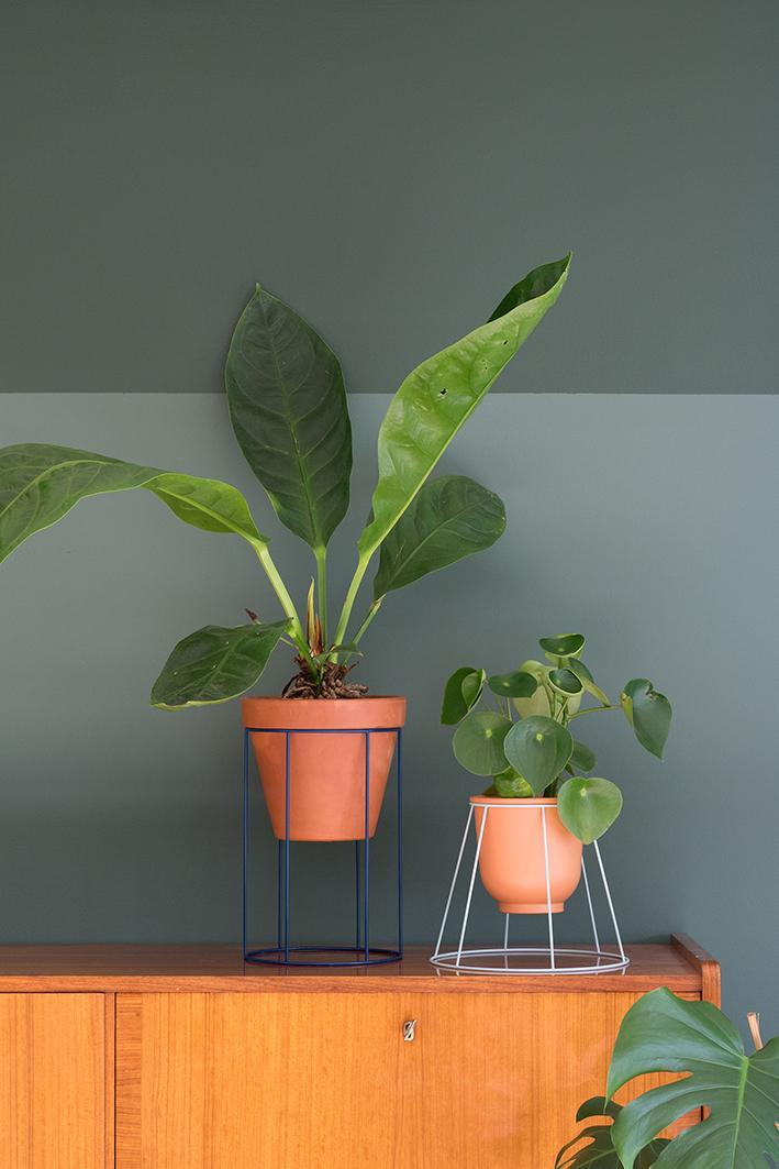 flamingo plant